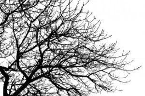 branches_21191236